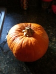 Pie Pumpkin